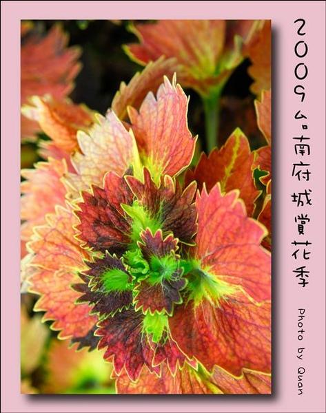 2009台南府城賞花季0115.jpg