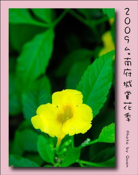 2009台南府城賞花季0117.jpg