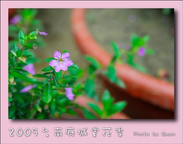 2009台南府城賞花季0118.jpg