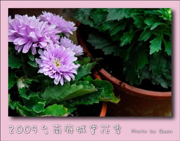 2009台南府城賞花季0120.jpg