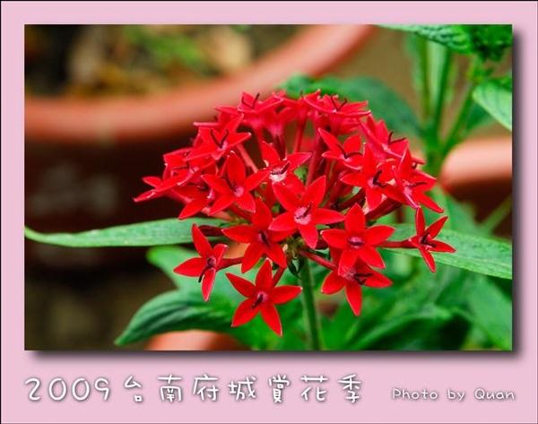 2009台南府城賞花季0122.jpg