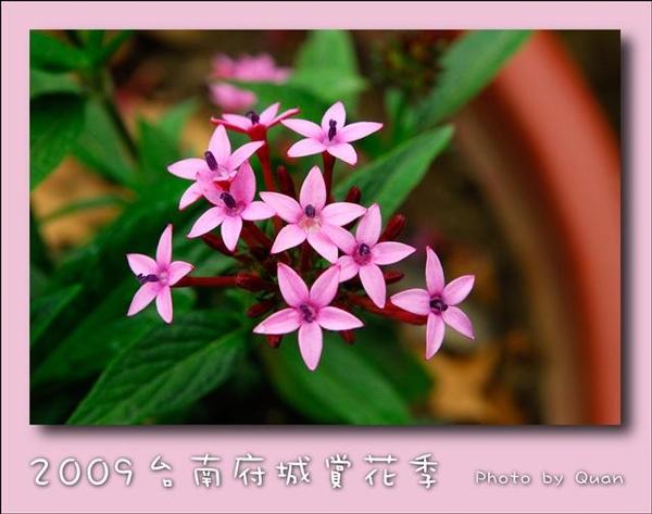 2009台南府城賞花季0123.jpg