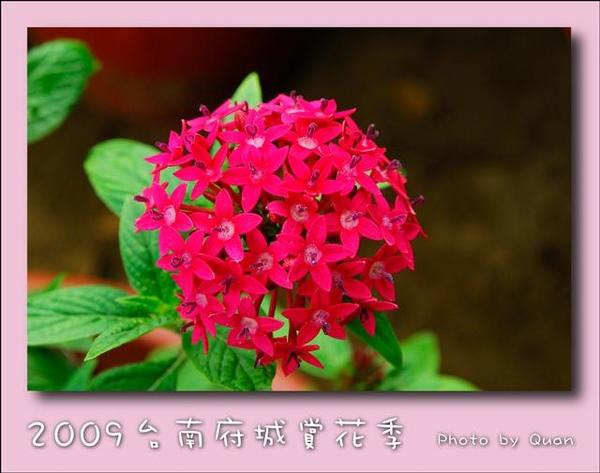 2009台南府城賞花季0124.jpg