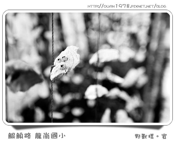 龍崗國小0010.jpg
