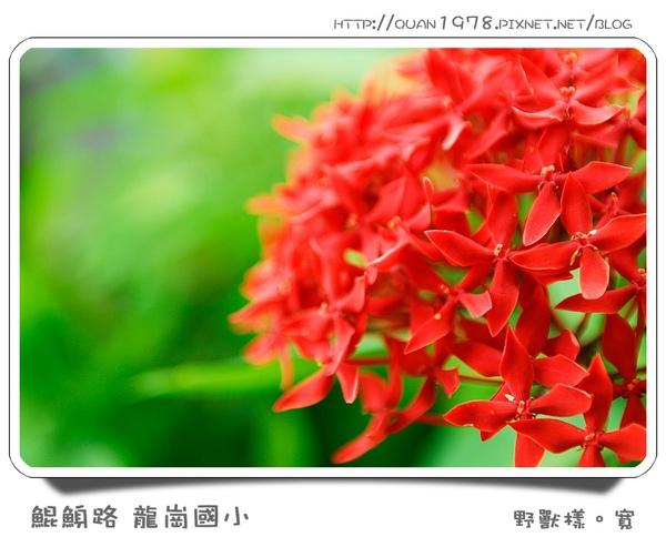 龍崗國小0011.jpg