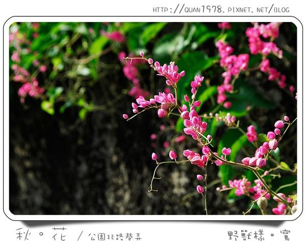 秋花0001.jpg
