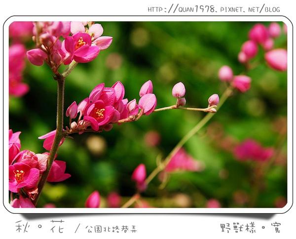 秋花0003.jpg