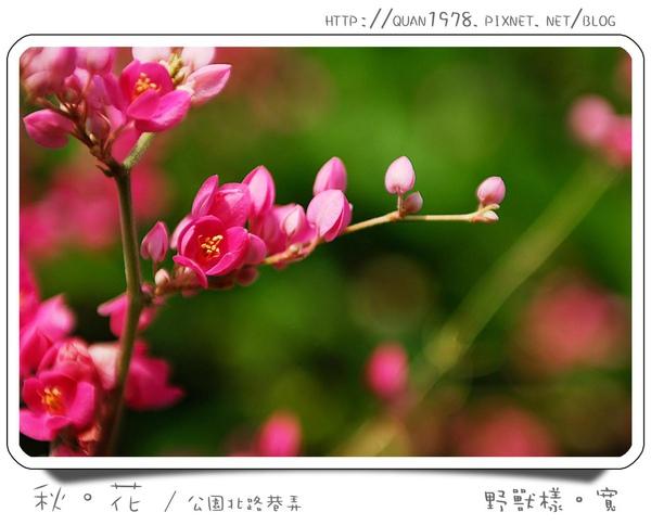 秋花0004.jpg