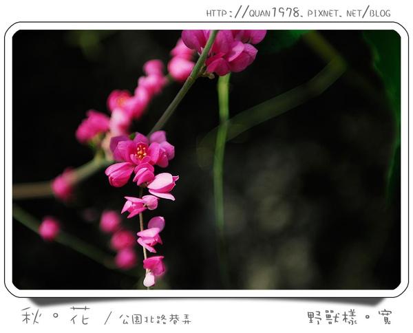 秋花0005.jpg