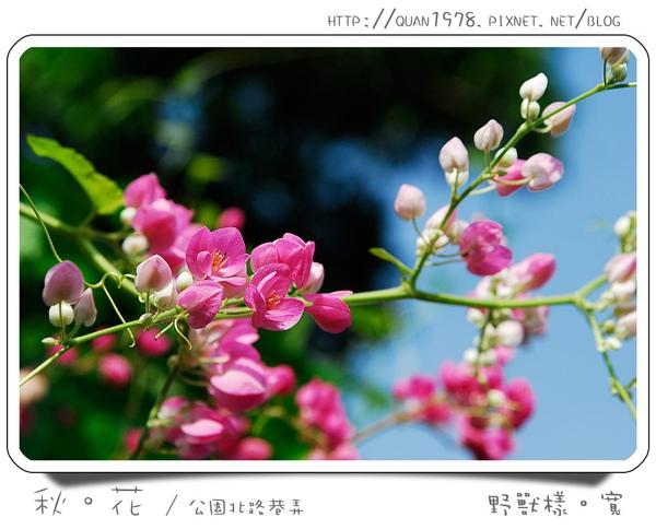 秋花0008.jpg