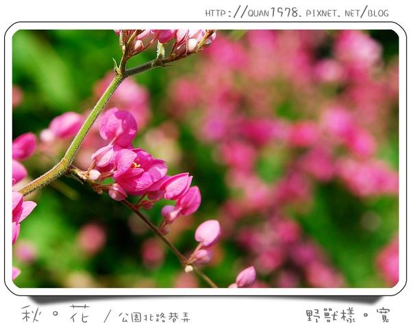 秋花0009.jpg