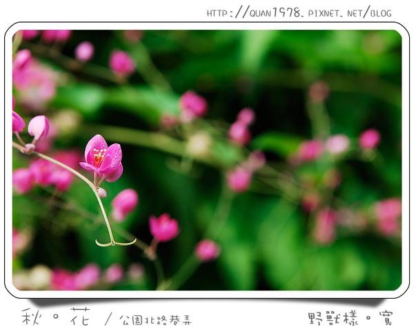 秋花0013.jpg