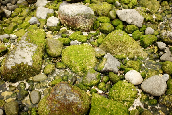 石頭2.jpg