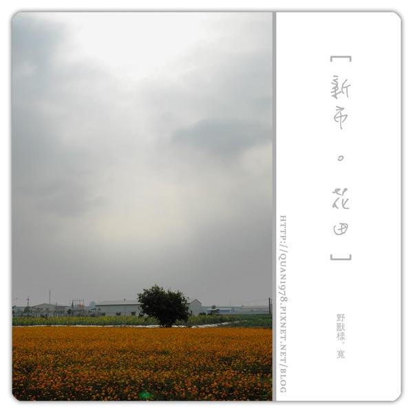 新市花田0001.jpg