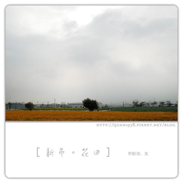 新市花田0002.jpg