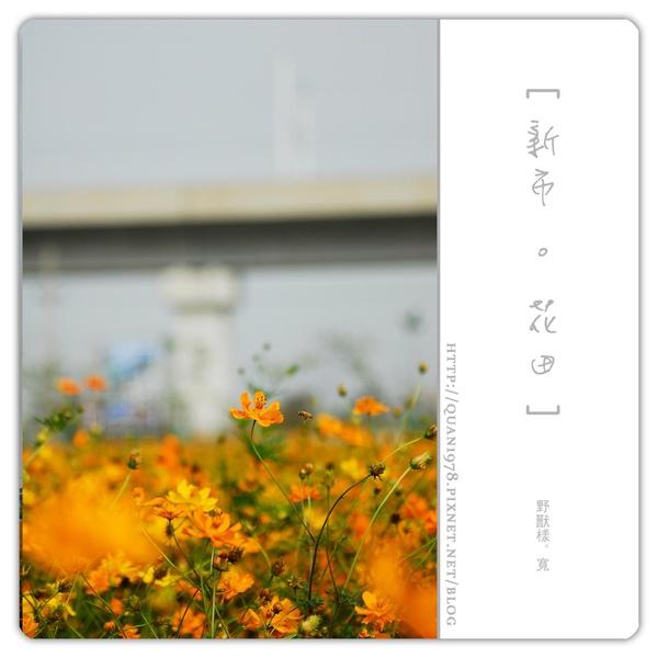 新市花田0003.jpg