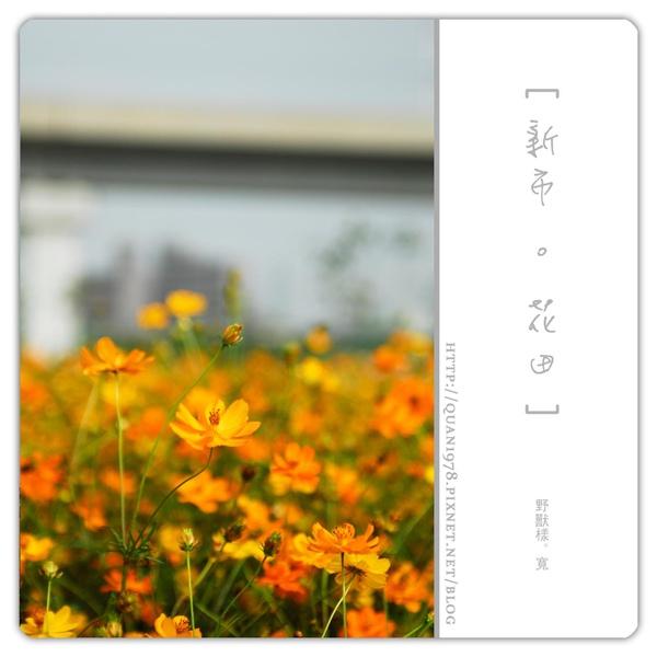 新市花田0004.jpg