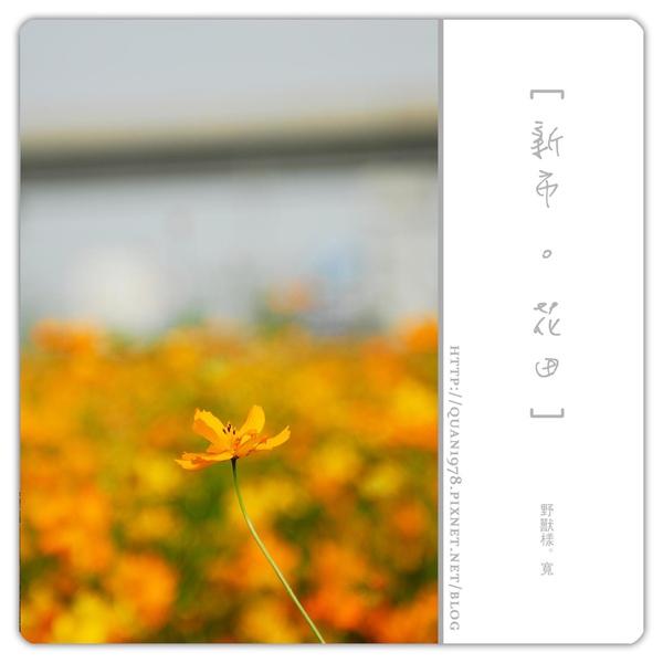 新市花田0005.jpg