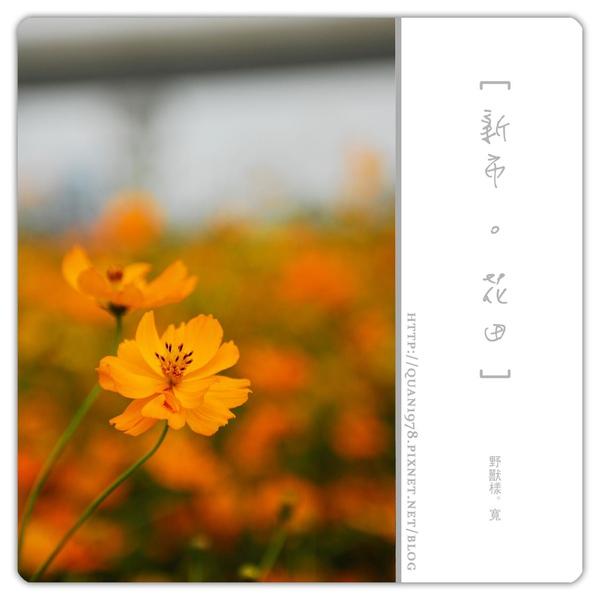 新市花田0006.jpg