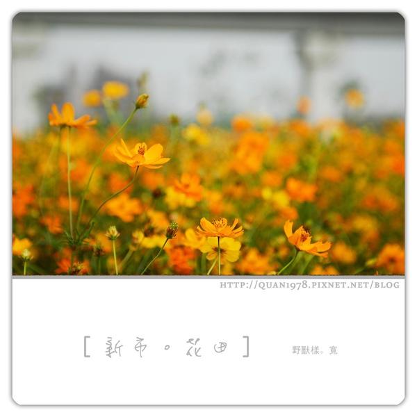 新市花田0007.jpg
