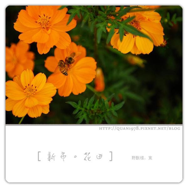 新市花田0008.jpg