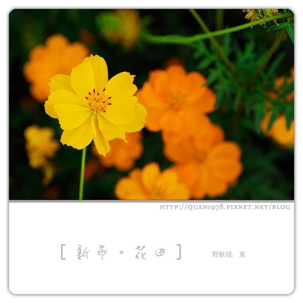 新市花田0009.jpg