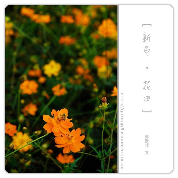 新市花田0010.jpg