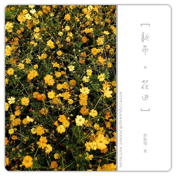 新市花田0011.jpg