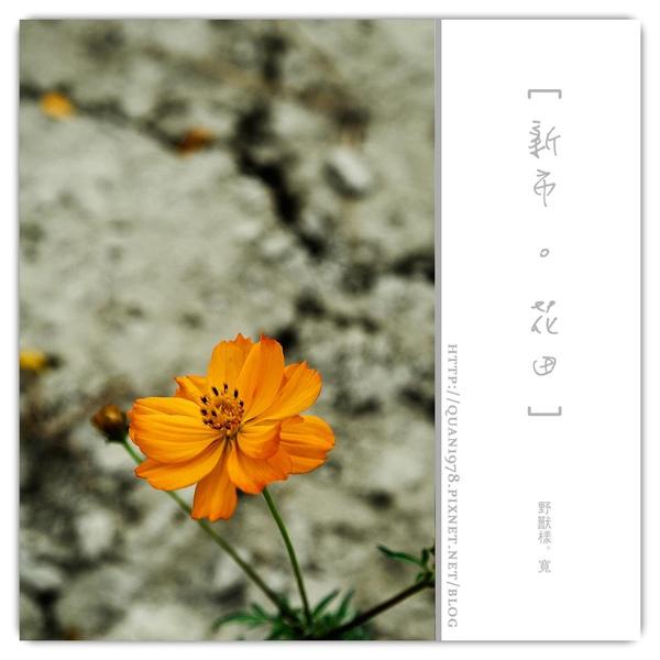 新市花田0012.jpg