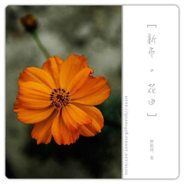 新市花田0013.jpg