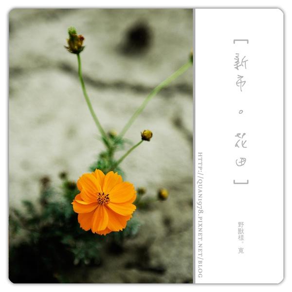 新市花田0014.jpg