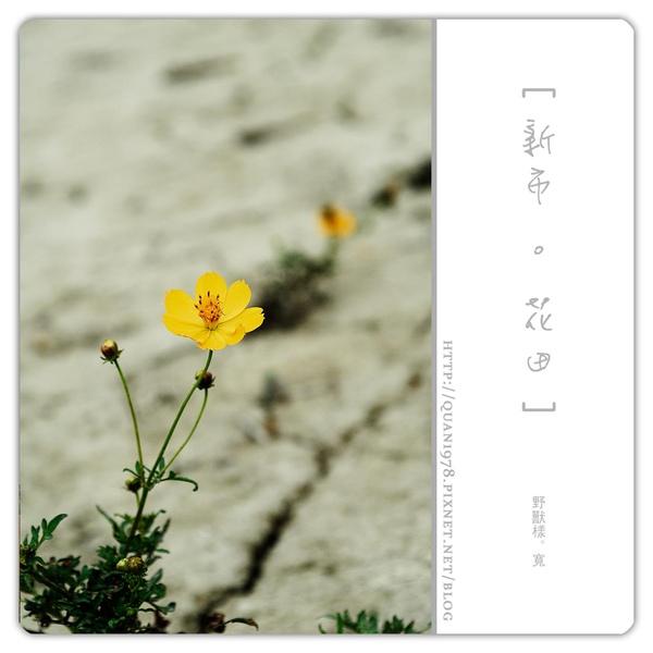 新市花田0015.jpg