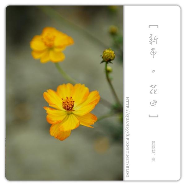 新市花田0016.jpg