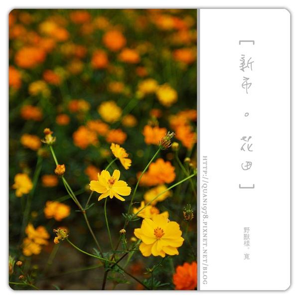 新市花田0019.jpg
