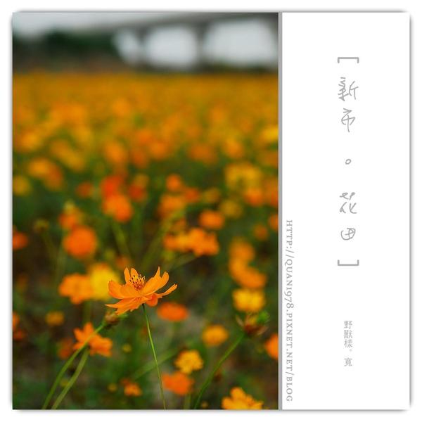 新市花田0020.jpg