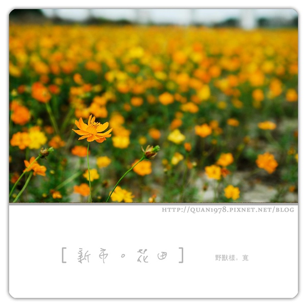 新市花田0021.jpg