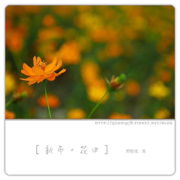 新市花田0022.jpg