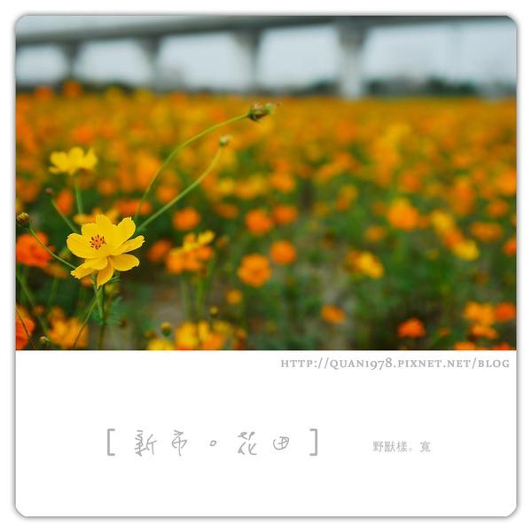 新市花田0023.jpg