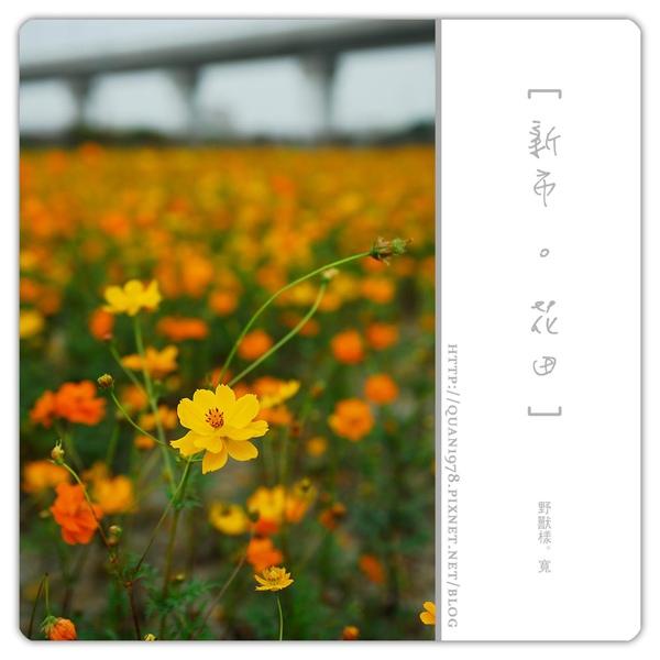 新市花田0024.jpg