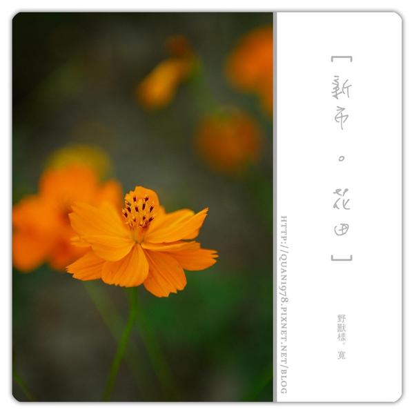 新市花田0025.jpg
