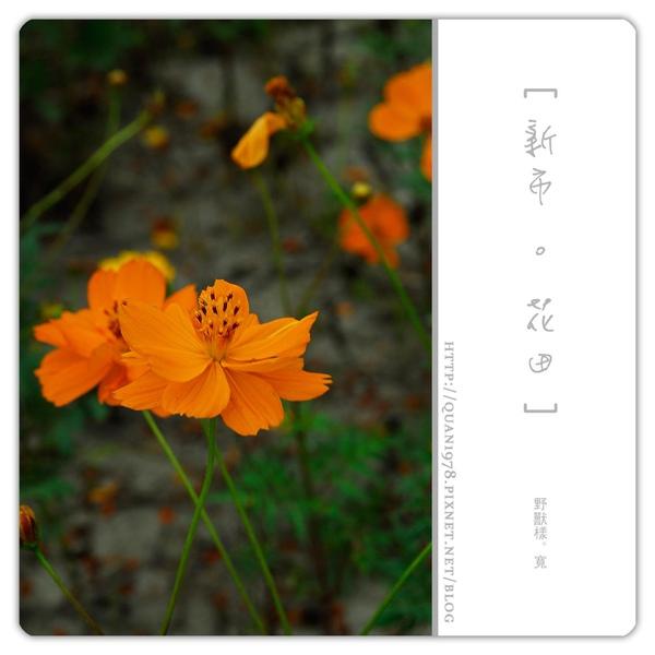 新市花田0026.jpg