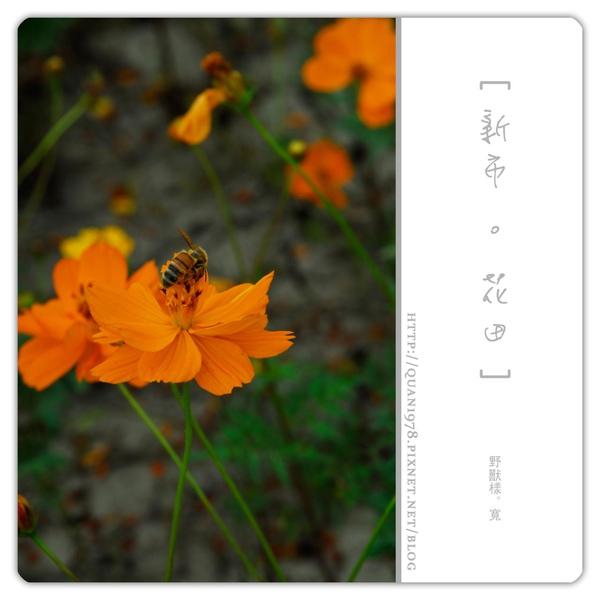 新市花田0027.jpg