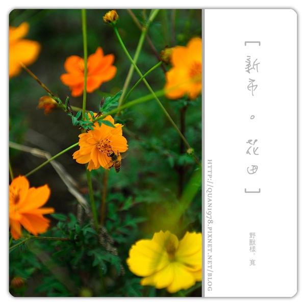 新市花田0028.jpg