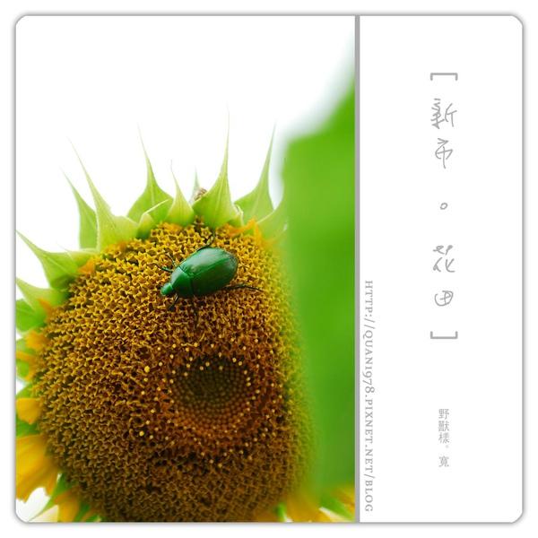 新市花田0029.jpg
