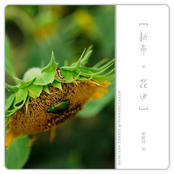 新市花田0030.jpg