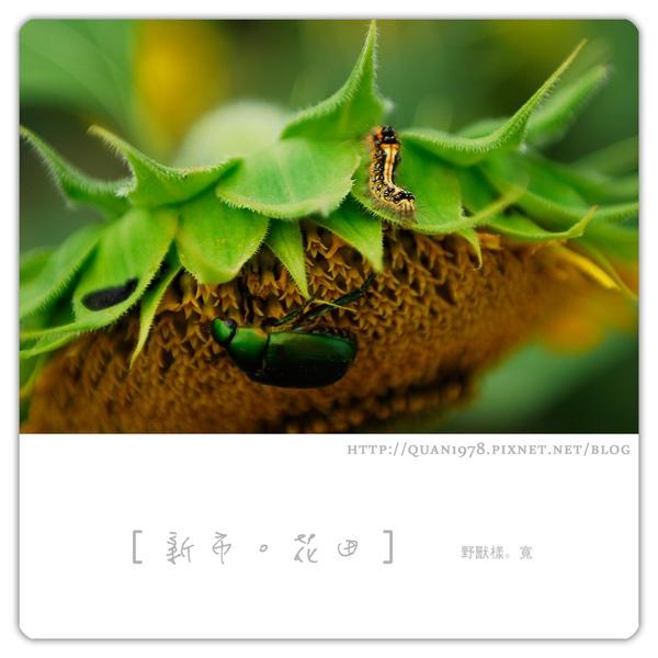 新市花田0031.jpg