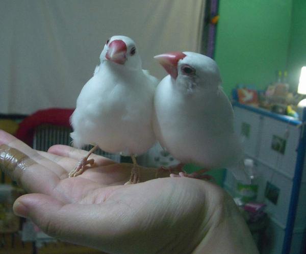 太郎+文鳥.JPG