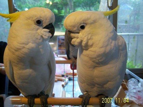 左手邊是娜娜,右手邊是乖乖