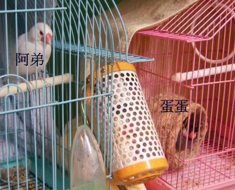 文鳥2.jpg