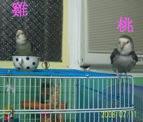 小雞1.jpg